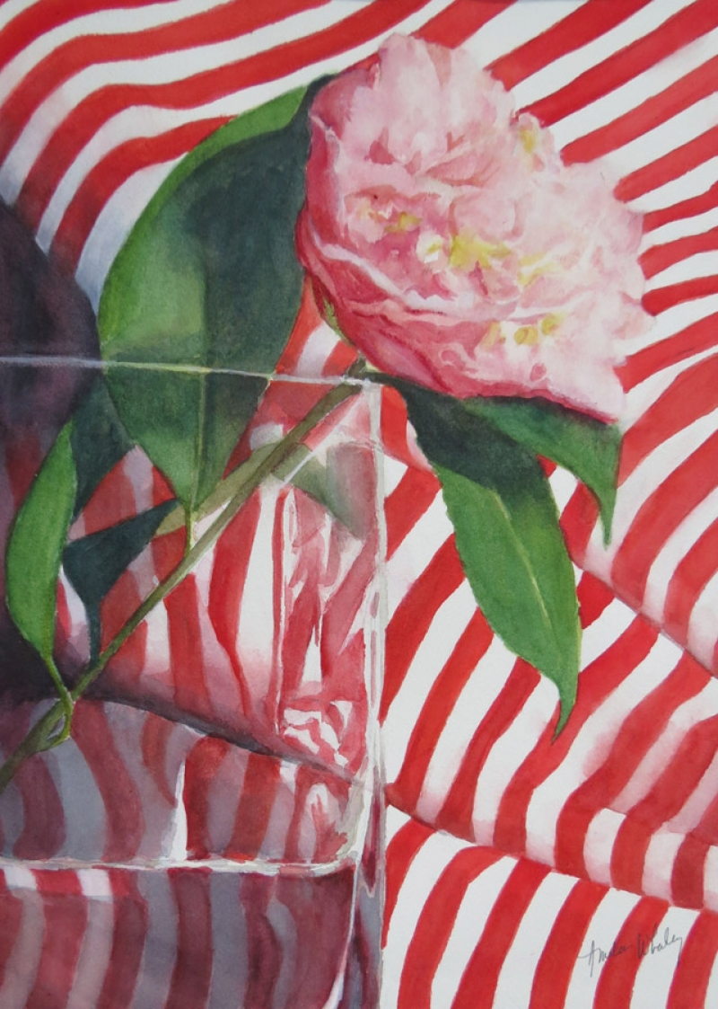 Camellia with Red Stripes